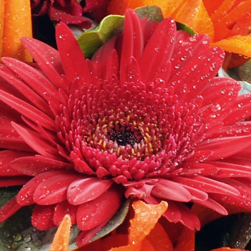 Fleurs deuil Coussin rouge / orangé