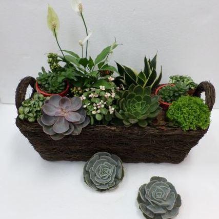 Bouquet de fleurs Plants Arrangement