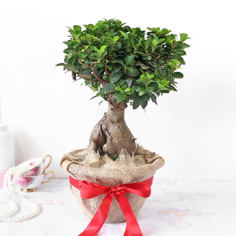Bouquet de fleurs Bonsai Plant in Jute Wrapping with Plastic Planter