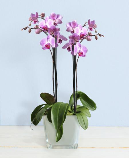 Bouquet de fleurs Spell