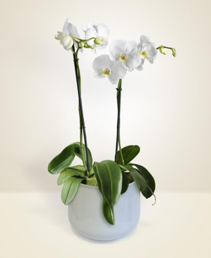 Bouquet de fleurs Charme