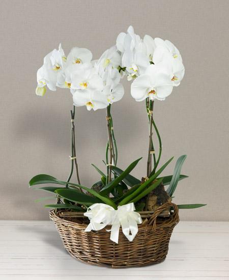 Bouquet de fleurs Cesto di orchidee