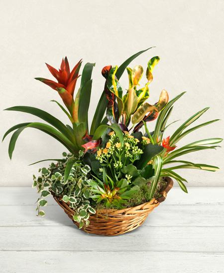 Bouquet de fleurs Cesto di piante