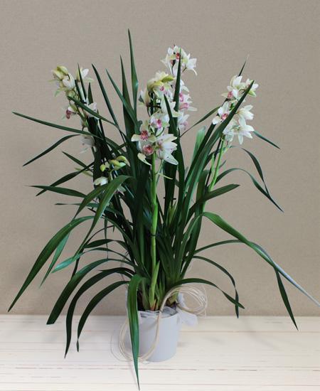 Bouquet de fleurs Mini Cymbidium