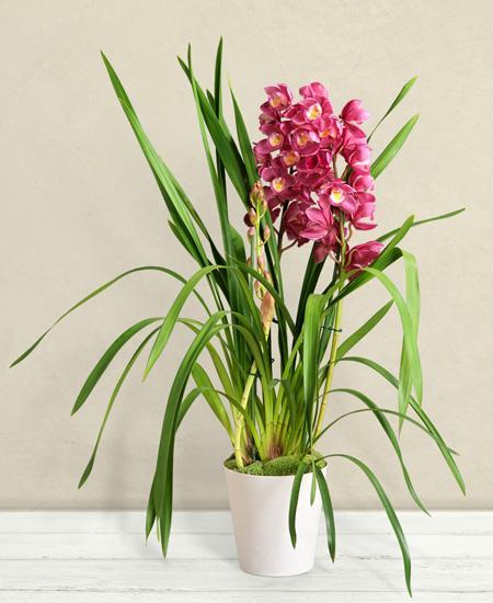 Bouquet de fleurs Orchidea Cymbidium