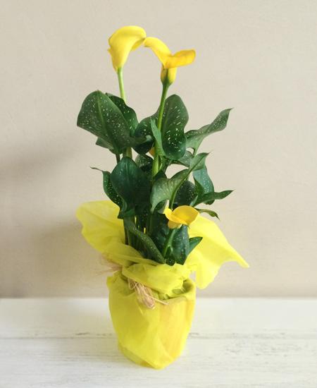 Bouquet de fleurs Calla