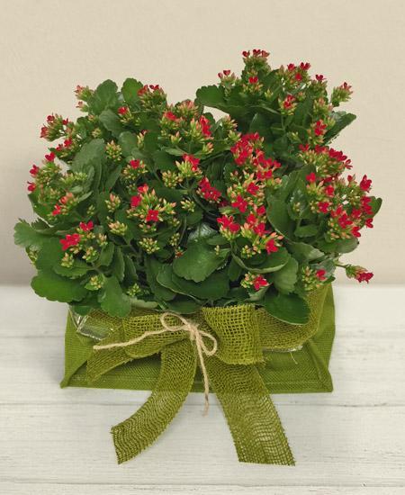 Bouquet de fleurs Kalanchoe in basket