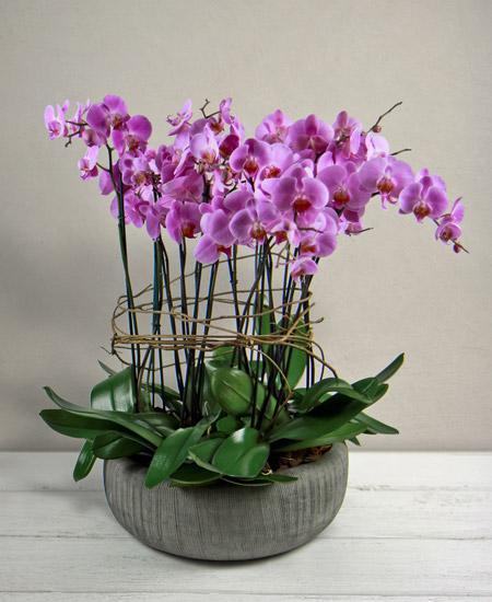 Bouquet de fleurs Phalaenopsis rosa