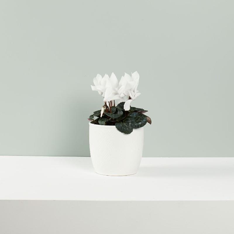 Bouquet de fleurs Seasonal Flowering Plants