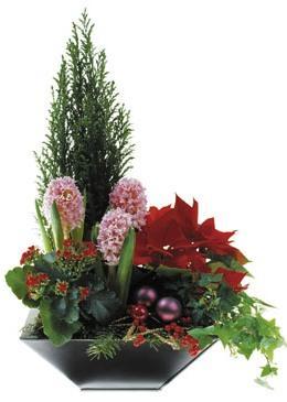 Bouquet de fleurs Arrangement of Plants
