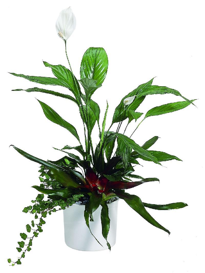 """Bouquet de fleurs Arrangement of Plants """"Island"""""""