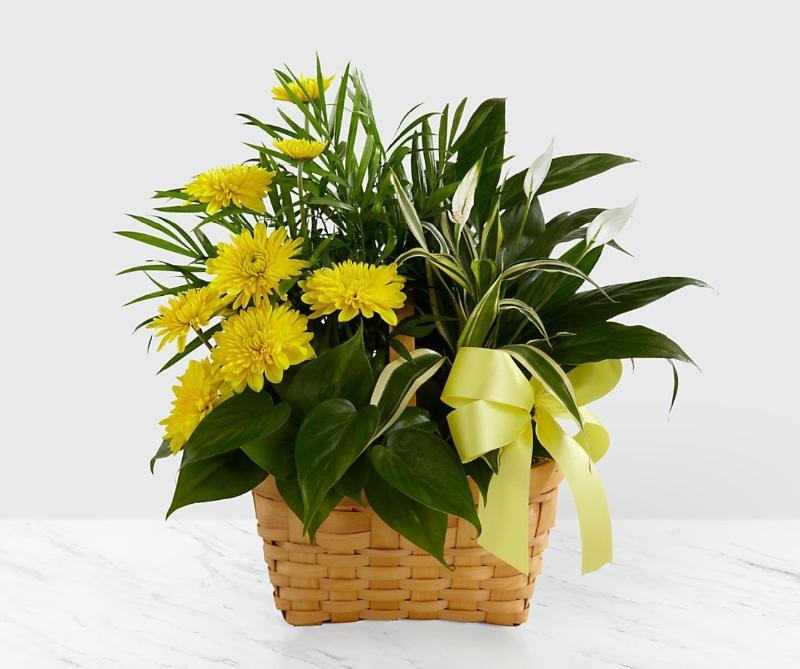 Bouquet de fleurs Loving Light Dishgarden