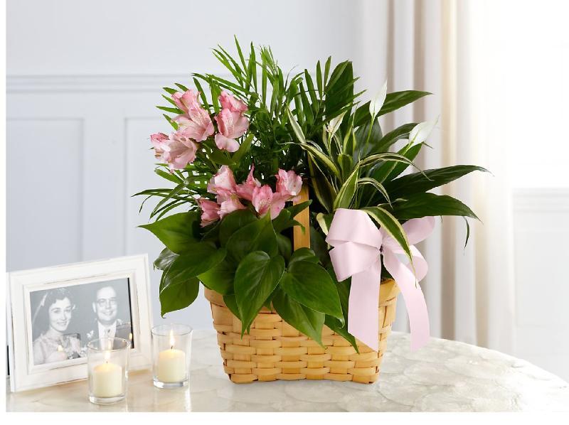 Bouquet de fleurs Living Spirit Dishgarden