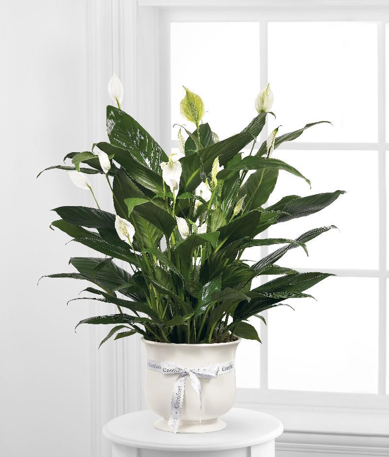 Bouquet de fleurs The FTD Comfort Planter