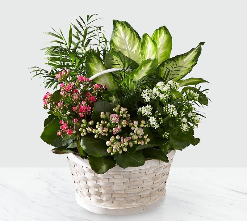 Bouquet de fleurs Rural Beauty Dishgarden