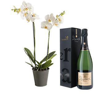 Fleurs et cadeaux Orchidée pétillante Collection Hommes