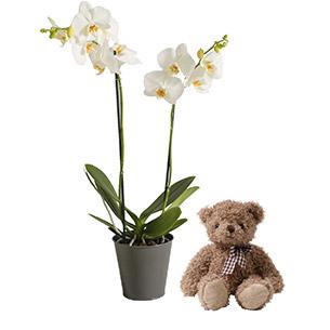 Bouquet de fleurs Orchidée câline Naissance