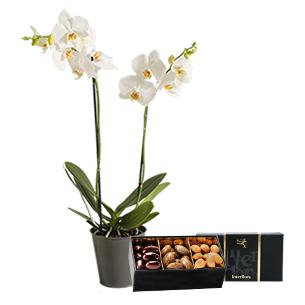Bouquet de fleurs Orchidée gourmande Anniversaire