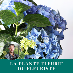 Bouquet de fleurs Plante fleurie du fleuriste