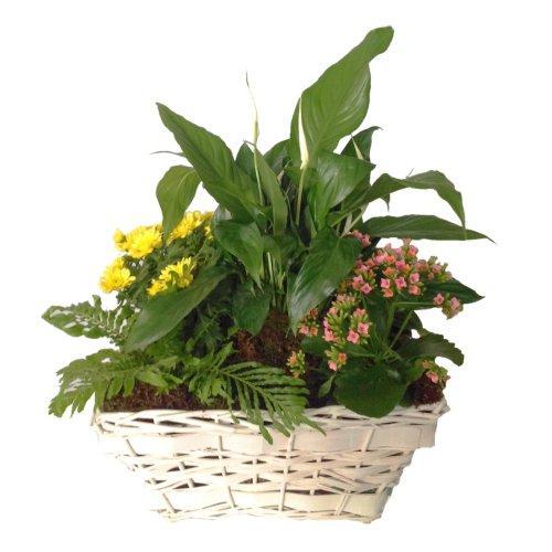 Bouquet de fleurs Mixed plants in basket